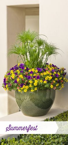 Summerfest is a bold mix of plants that love the heat and humidity of summer--look for this combination to rock with color into fall. #containergardeningideaspatio