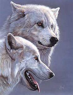 Arktischer Wolf, Wolf Love, Wolf Spirit, Spirit Animal, Beautiful Wolves, Animals Beautiful, Malamute, Arctic Wolf, Wolf Stuff