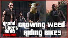 GTA 5 Online Biker DLC Growing Weed and Riding Bikes http://onlinetoughguys.com/gta-5-online-biker-dlc-growing-weed-and-riding-bikes/ https://www.youtube.com/watch?v=WfPYws4R98M #DLC #GTA5 #BikerGang #GTAV #GTA5Online