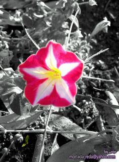 Black and white with touch of color by mortadha redha, via Flickr