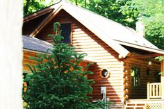Cabin front Pine Tree