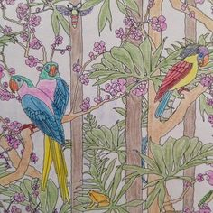 #papagei#parrot#animals#pilodendron#blossoms#moth#flowmagazine#flowmagazin#illustration#zeichnung#mindfulness#coloring#patterns#meditation#buntstifte#achtsamkeit#konzentration#colours#anmalen#flowmalbuch#art#kunst#mariekirkmikkelsen#pictures#nature#natur#urwald#regenwald