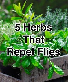 5 Herbs That Repel Flies.Keep these herbs growing in your garden to repel flies.Basil, Bay Leaves, Lavender, Tansy, and Pennyroyal.