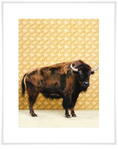 Bison On Yellow