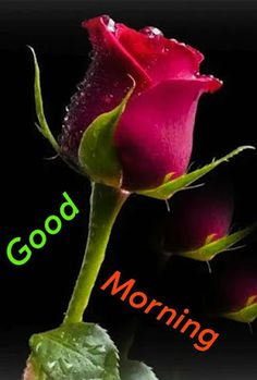 Very Good Morning Images, Good Morning Love Gif, Romantic Good Morning Messages, Good Morning Flowers Pictures, Good Morning Friends Images, Good Morning Life Quotes, Good Morning Dear Friend, Good Morning Happy Sunday, Good Morning Inspiration
