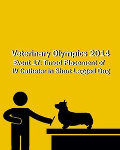 Veterinary Olympics Event #17 - Timed Placement of IV Catheter in Small Legged Dog