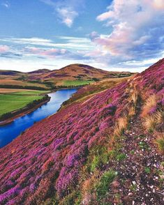The green valley river mountains in the Pentland Hills covered by violet heather flowers. So pretty! Click to see 28 more mind blowing photos of Scotland on avenlylanetravel.com #scotland #europe #avenlylanetravel