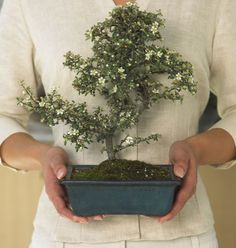 How to care for a bonsai tree: http://blog.hgtvgardens.com/bonsai-how-to-care-for-these-miniature-works-of-art/?soc=pinterest
