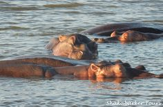 Hippos at Lake St Lucia...do not disturb!