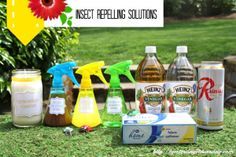 DIY Mixtures and Home Remedies for repelling insects #repellinginsects #citronellacandles #bugs #insects #yesterdayontuesday