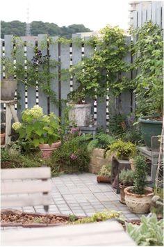 Vegetable Garden, Backyard, Privacy Screens, Fences, Plants, Gardening, Gardens, Decorating Ideas, Lawn And Garden