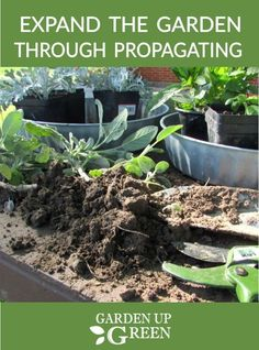 Are you ready to expand your garden for free? Discover the beauty of natural propagation - it will enhance your gardening experience. Gardening For Beginners, Gardening Tips, Air Plants, Indoor Plants, Easy Vegetables To Grow, Veggies, Pergola Pictures, Outdoor Garden Furniture, Garden Pests
