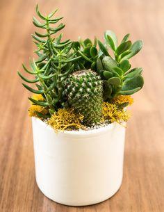 Pigment - Ceramic White Gloss Cercle Planter, $10.00 (http://www.shoppigment.com/ceramic-white-gloss-cercle-planter/)