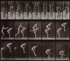 Animal Locomotion (Plate 167), 1887, Eadweard Muybridge