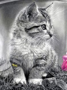the something and me: Cat art, cat pencil drawings Cute Kittens, Cats And Kittens, Cute Baby Animals, Animals And Pets, Pencil Drawings Of Animals, Drawing Animals, Drawings Of Cats, Realistic Drawings Of Animals, Pencil Drawings Of Flowers