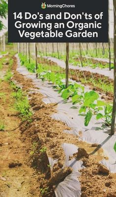14 Do's and Don'ts of Growing an Organic Vegetable Garden An organic vegetable garden is very distinct from a conventional garden. If you are new to organic gardening, you must read these pointers first! Organic Soil, Organic Gardening Tips, Organic Farming, Sustainable Gardening, Gardening Blogs, Gardening Services, Gardening Courses, Herb Gardening, Organic Fruit