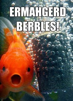 Ermahgerd! Im cracking up over here. Look at that fish face!