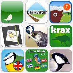 Vår guide till fågelappar –digitala fågelböcker att ha med i mobilen | Natursidan