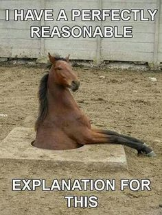 If Alice in Wonderland had a cast of horses! Don't think he'd fit down the rabbits hole