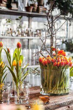 tulpan vårblommor blomsterfrämjandet Anna gouteva minna mercke schmidt-2