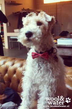 Bow Wow Ties from Wool & Water  www.woolandwater.nl #petbowtie