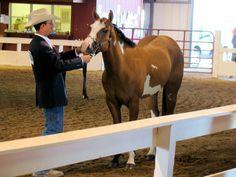 My painted quarter horse, Little Miss Sensational me! Wisconsin