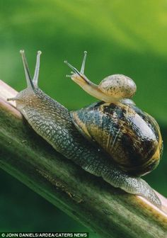 Snail Piggyback Ride