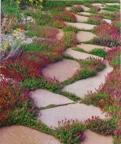 Зелёные садовые дорожки