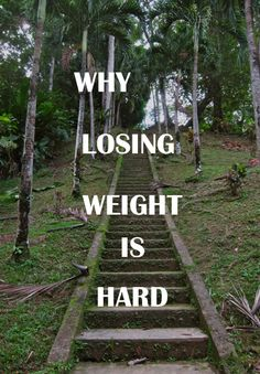Why Is Losing Weight So Hard? copy