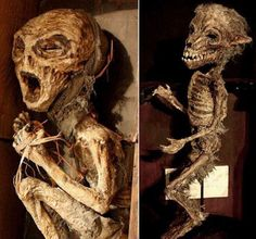 Unexplainably Weird Skeletons Found In Sealed Basement Beneath London Orphanage [Fake? How dare you even suggest such a thing! Unexplained Phenomena, Unexplained Mysteries, Weird Creatures, Mythical Creatures, Paranormal, Ufo, Bizarre, Cryptozoology, Strange History