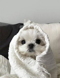 Super Cute Puppies, Cute Baby Dogs, Cute Little Puppies, Cute Dogs And Puppies, Cute Little Animals, Cute Funny Animals, Cute Cats, Pet Dogs, Pets