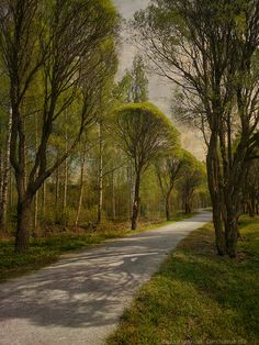 Tree-lined road near our house from last May. Tree Line, Winding Road, Landscape Photographers, Illustration Art, Illustrations, Finland, Road Texture, Country Roads, Landscapes