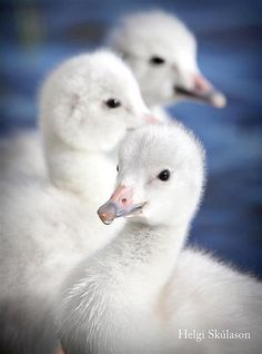 3 amigos | Flickr - Photo Sharing!
