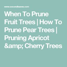 How and when to prune your fruit trees can be a big question. Visit our site and seen how we can help you answer those with tips and tricks on how to prune cherry, apricot, pear and other fruit trees. Prune Fruit, Pruning Fruit Trees, Tree Pruning, Pear Trees, Cherry Tree, Amp, Garden, Garten, Lawn And Garden