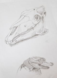 animal skull and crocodile, drawing