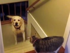 The Daily Treat: 3 Minutes of Dogs Afraid of Walking Past Cats Dog Stories, All Things Cute, Dog Walking, Real People, Cat Love, Funny Dogs, Dog Cat, Puppies