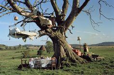 broken treehouses
