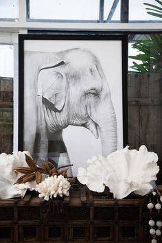 elephant print / penny farthing design house