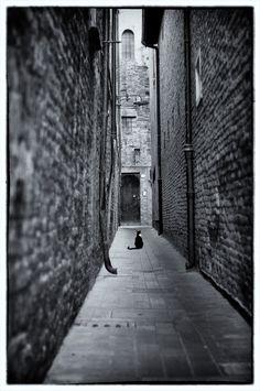 Waiting by Dario Monti