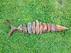 Driftwood fish..Barracuda. Natural object art...Waiitiboy, Punakaiki.