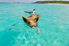 pierderea în greutate retreat bahamas)