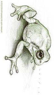 Frog Sketch by Jason Seiler.