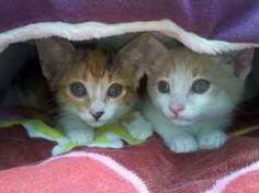 kitties!!!!!!!
