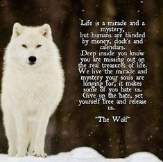 Is this just for the wild animal wolf or the wild in us; let the courage out if you've been mastering Taekwondo and you're sure of your self-control habits. OMG this is so beautiful and sad at the same time! Makes me wanna cry lets save the wolves. Wolf Spirit Animal, Animal Spirit Guides, Lone Wolf Quotes, Tier Wolf, Of Wolf And Man, Wolf Stuff, Warrior Quotes, Wolf Love, A Silent Voice