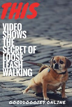 Leash pulling can be hard when it come to dog and puppy training. This video from a pro dog trainer shows how to fix it.