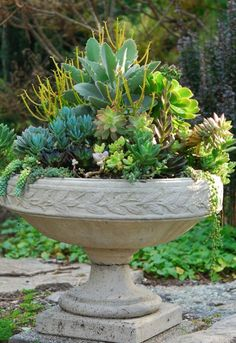 Tips for wintering over succulents indoors