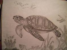 Sea Turtle Drawing - artistic101 © 2014 - Apr 3, 2012