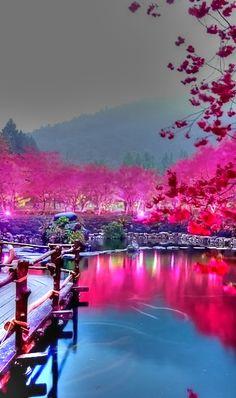 Cherry Blossom Lake in Sakura, Japan