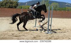 Young rider girl jumping with her horse. A horse for equestrian sport    #Equitacion #Caballos #hipica  #horses #equestrian     #Stockphoto #photo