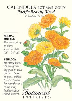 Pacific Beauty Pot Marigold Calendula Seeds - 1.5 grams